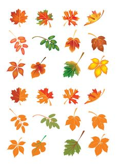 Free Vector Autumn Leaves Stock Photos - 6824313