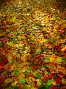 Free Leaves On The Ground Royalty Free Stock Photo - 6825565