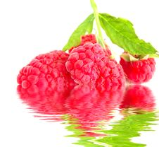 Close-up Of Raspberry Royalty Free Stock Photo