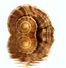 Free Colored Spiral Shell Royalty Free Stock Photography - 6827677