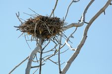 Free Cormorant Nest Stock Photography - 6829412