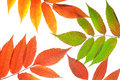 Free Autumn Leaves Stock Photography - 6830912