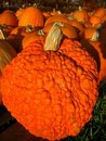Free Pumpkin Patch Stock Images - 6838064