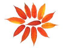 Free Autumn Leaves Royalty Free Stock Photos - 6830708