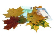 Autumn Leaf Fall Of Euro On A White Background Royalty Free Stock Photo