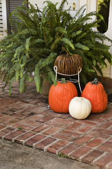 Free 4 Pumpkins And A Fern Stock Image - 6831811