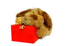 Free Toy-dog With Gift Box Royalty Free Stock Image - 6832256