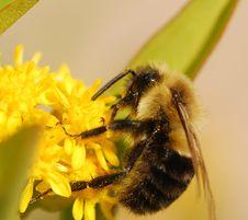Free Bee Stock Photos - 6832733