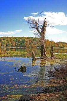 Free Lifeless Tree Submerged In Sand Lake Royalty Free Stock Photo - 6834975