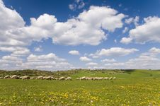 Free Sheeps On The Grass-land Stock Images - 6835044