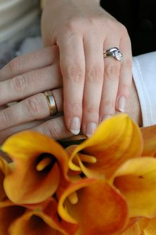 Free Wedding Rings Stock Photography - 6835502