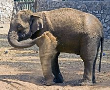Free Elephant 21 Royalty Free Stock Photo - 6836285
