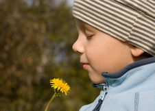 Free Boy Smelling Dandelion In Autumnal Scenery Stock Image - 6837361