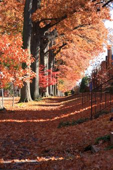 Free Autumn At Street Royalty Free Stock Images - 6838179