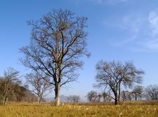 Free Lonely Old Elm In The Autumn Royalty Free Stock Photos - 6838218