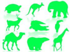 Free Wildlife Royalty Free Stock Images - 6838829