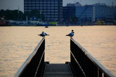 Free Birds On A Pier Royalty Free Stock Photos - 6838848