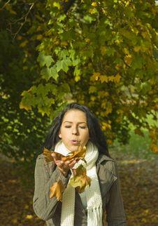 Free Fall Season Stock Photography - 6839412