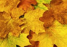 Free Autumn Colors Explosion Stock Photo - 6839900