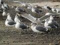 Free Seagulls On Shore Stock Photo - 6849010