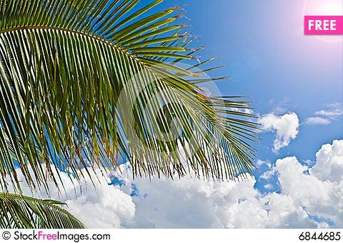 Free Palm Tree Paradise Royalty Free Stock Photo - 6844685
