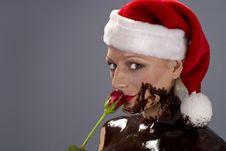 Chocolate Santa Rose Royalty Free Stock Images