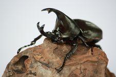 Free Beetle - Bug Stock Images - 6840364
