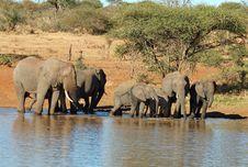 Free African Elephants Stock Photo - 6841620