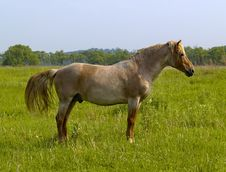 Free Horse On A Meadow Royalty Free Stock Photos - 6841678