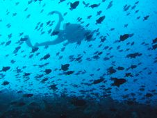 Free Diver And Fishes Stock Photo - 6842110