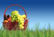 Free Fruits In A Basket Stock Photo - 6842190