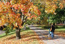 Free Autumn Avenue Royalty Free Stock Photos - 6842228
