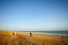 Free Horse At Qinghai Lakeside Royalty Free Stock Photo - 6842555