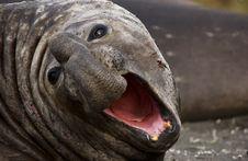 Free Elephant Sea Royalty Free Stock Photography - 6843327