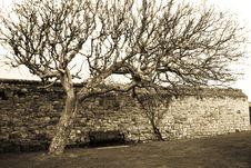 Free Tree Over Bench Stock Photos - 6843353