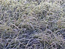 Frost Grass Royalty Free Stock Images