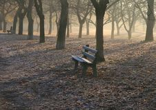 Free Trees And Bench In The Morning Royalty Free Stock Photos - 6844118