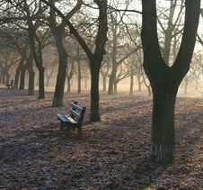 Free Trees And Bench In The Morning Royalty Free Stock Images - 6844119