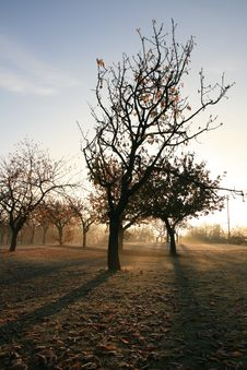 Free Tree In The Morning Royalty Free Stock Photo - 6844245