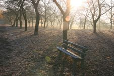 Free Trees And Bench In The Morning Stock Image - 6844491