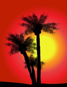 Free Palms Over Sunset Stock Image - 6844841