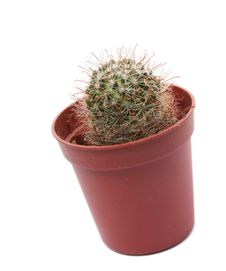 Free Cactus In Flowerpot Royalty Free Stock Photography - 6845727