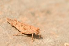 Free Grasshopper Camouflage Royalty Free Stock Images - 6845729