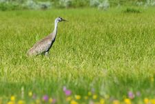 Free Bird In Field And Flowers Stock Photo - 6846170