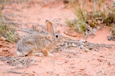 Free Sand Bunny Hiding In Desert Stock Photography - 6846282