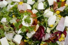 Free Salad With Mozarella Royalty Free Stock Image - 6846376