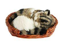Free Sleeping Cat Royalty Free Stock Photos - 6846488