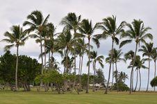 Free Palm Trees Stock Image - 6847821