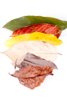 Free Autumn Leaves On White Stock Photos - 6848123