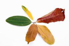 Free Autumn Leaves On White Stock Photo - 6848140